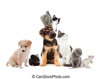 Pets  looking