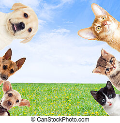 pets on a background of green grass