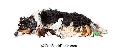 Pets Together on White Banner - Group of domestic pets...