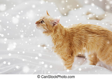red tabby cat at home in bed over snow