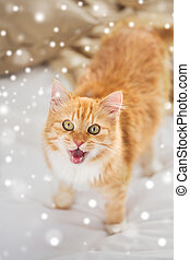 red tabby cat mewing in bed at home over snow