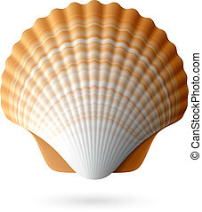pettine, seashell