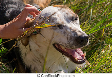 Petting the dog. Dog in grass