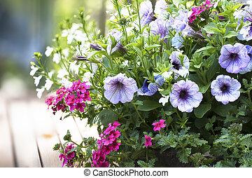 Petunia and Verbena Basket