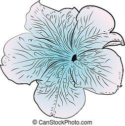 Petunia flower illustration - Decorative summer flower ...