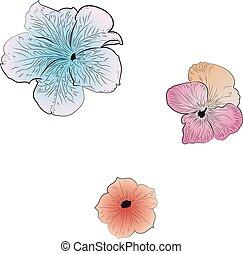 Decorative summer flower petunia illustration on white background.