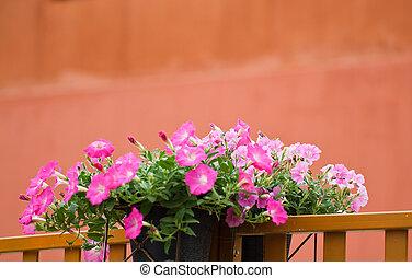 Petunia flower