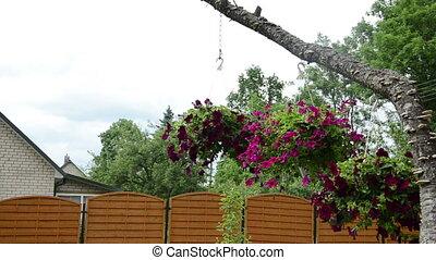 petunia flower pot hang