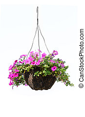 Petunia flower - Hanging basket with a petunia flower...