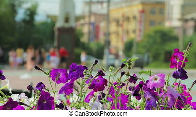 Petunia flowers and walking people in city park