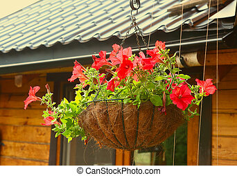 Petunia Flowers In Hanging Flower Pot basket
