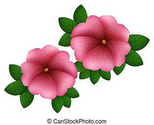 Petunia flowers in pink color illustration
