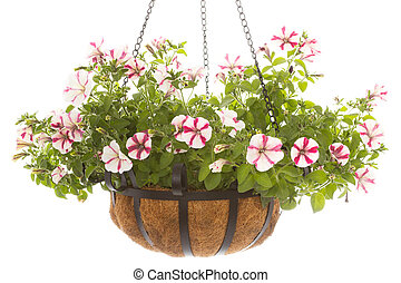 Hanging basket with a petunia over a white background