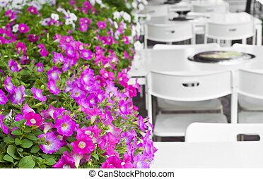 Petunia in outdoor restaurant.