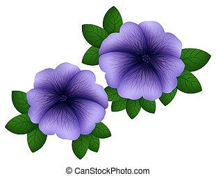 Petunia in purple color illustration