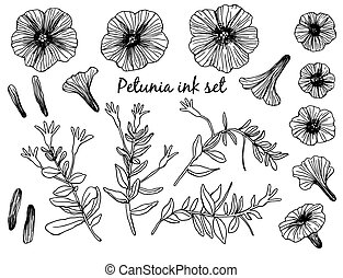 Collection of hand drawn petunia flowers and stems with leaves. Design elements on white background.