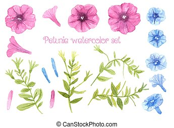 Collection of pink and blue petunia flowers and stems with leaves. Watercolor vector for design.