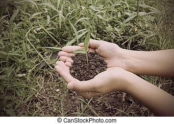 peu, avoirs, vendange,  Style, mains, plante, vert