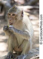 peu, baby-monkey, dans, singe, forêt, de, ubud