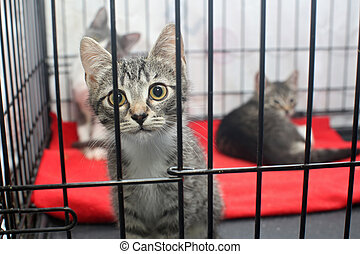 peu, cage, chatons