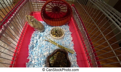 peu, cage, hamster