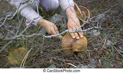 peu, champignons, forêt, cueillette, adorable, girl