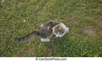 peu, charmer, him., grass., teases, vert, chaton, propriétaire, jouer