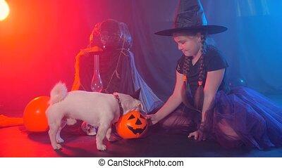 peu, chien, concept., halloween, girl, citrouille, rigolote, célébration, alimentation