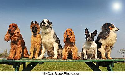 peu, chiens