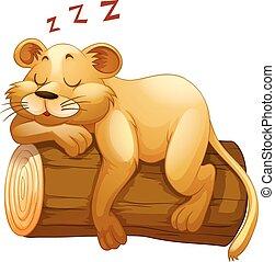 peu, dormir, bûche, lion, tasse