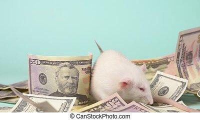 peu, fait, dollars, rat, blanc, nid