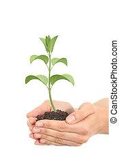 peu, femme, render, plante, mains, croissant