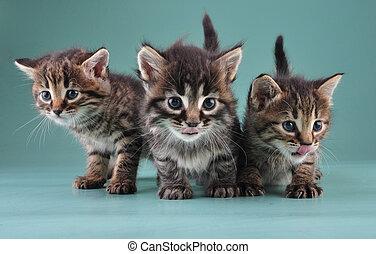 peu, groupe, trois, ensemble, chatons