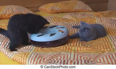 peu, jouet, jouer, chatons