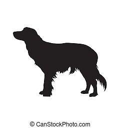 peu, kooikerhondje, chien, silhouette., vecteur, cager, vue côté
