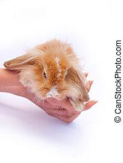 peu, lapins, mains