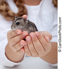 peu, mains, hamster, girl, tenue