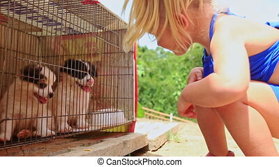 peu, natte, montres, blonds, chiots, girl, cage