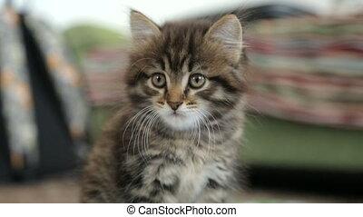 peu, plancher, chaton