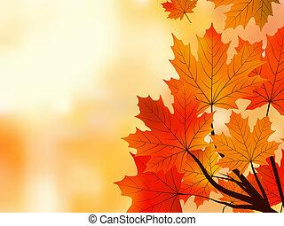 peu profond, arbre, feuilles, foyer., érable, automne, rouges