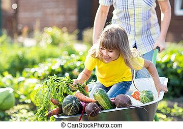 peu, rigolote, girl, intérieur, brouette, à, légumes, dans jardin