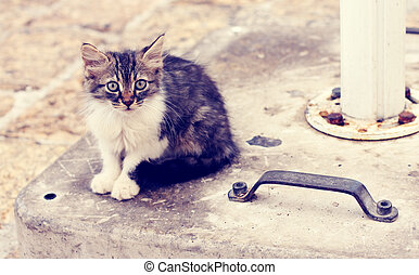 peu, rue, chaton, sdf, triste
