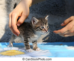 peu, sdf, chaton, dans, les, mains