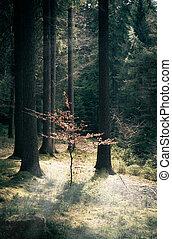 peu, solitaire, forêt arbre