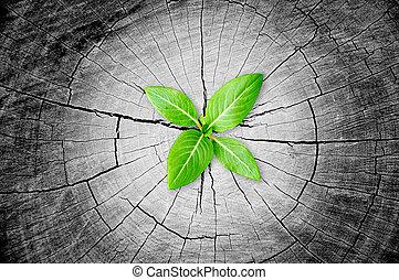 peu, souche, plant, arbre, vert, croissant