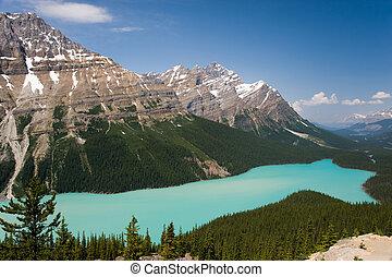 peyto, alberta, lago, canadá