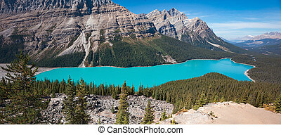 Peyto Lake in Alberta Canada