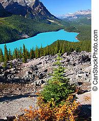 Peyto Lake of Banff National Park