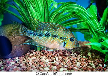 pez, Acuario