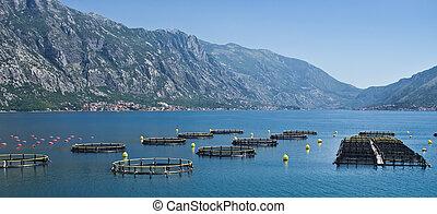 pez, agricultura, costero